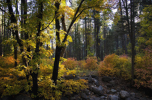 Saija  Lehtonen - The Magical Fall Colors
