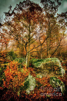 Dan Carmichael - Fall Colors Leaves Trees Rocks and Lichen