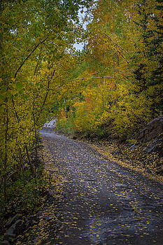 Fall Colors on Engineer Pass by Michael J Bauer