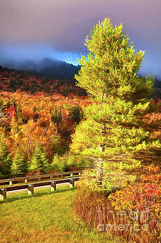 Dan Carmichael - Fall Colors on Grandfather Mountain AP