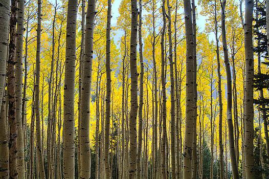 Saija  Lehtonen - Fall Colors Peaking Through