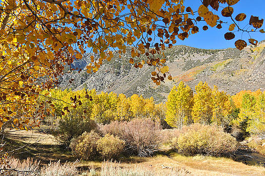 Fall comming in Bishop Creek by Dung Ma
