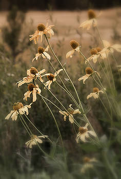 Fall Coneflowers by The Forests Edge Photography - Diane Sandoval
