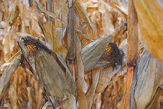Fall Corn at Harvest by Cindy Boyd