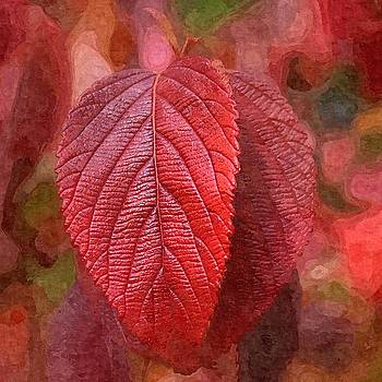 Fall Crimson by Nick Kloepping