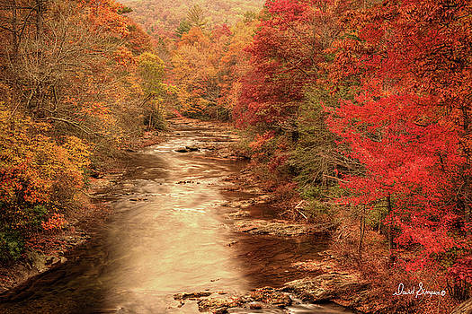 Fall Delight by David Simpson