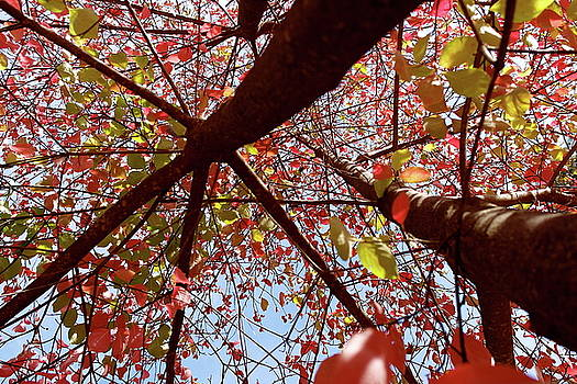 Fall Dogwood New Perspective by Michele Myers