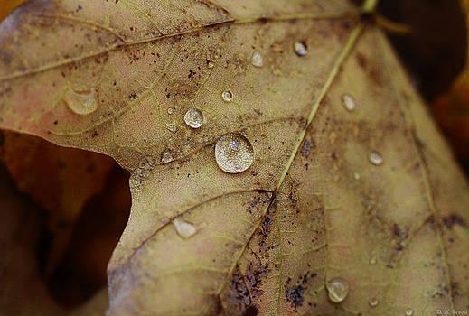 Deborah Benoit - Fall Droplets
