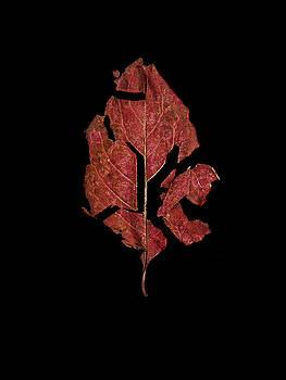 Fall End by Beth Achenbach