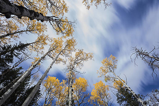 Fall Flow by Bill Cantey