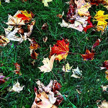 Fall Foilage by Christy Miles