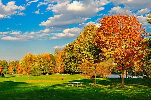 Fall foliage and a field. by Jay Mudaliar