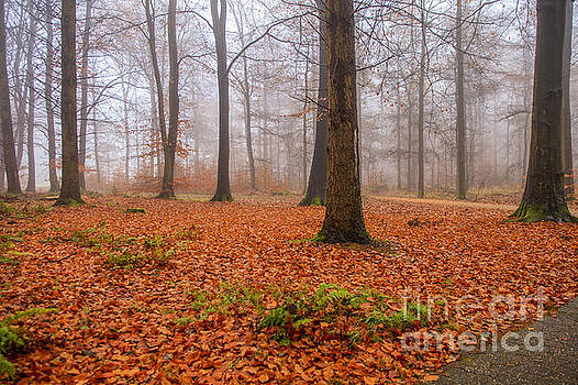 Patricia Hofmeester - Fall foliage in foggy forest