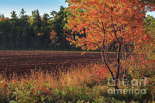 Fall Foliage by Verena Matthew
