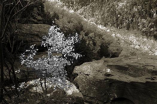 Fall Foliage by Yuri Lev