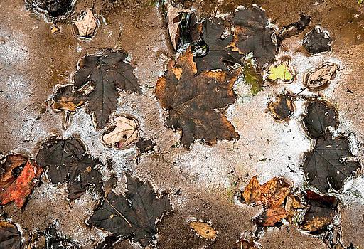 Fall Gold by Antonio Gruttadauria