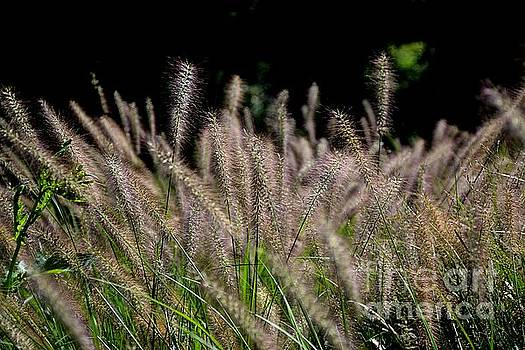 Fall Grass by Janice Spivey