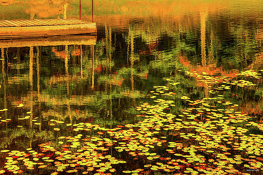 Fall Impressions by Rebecca Hiatt