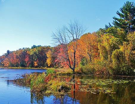Fall In Massachusetts  by Diane Valliere