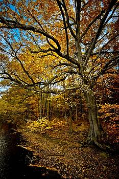 Fall in Pennsylvania by Linda Unger