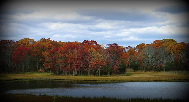 Fall In Rhode Island by Diane Valliere