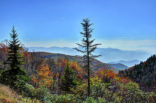 Fall in the Great Smoky Mountains by Savannah Gibbs