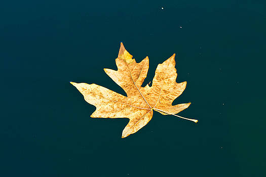 Fall in Water by Danielle Silveira