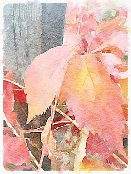 Fall Ivy by Sharon Wunder Photography