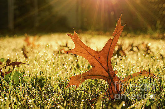Fall Leaf in Morning Sun Nature Photograph by Melissa Fague