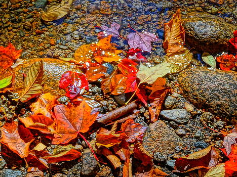 Fall leaves by Jean Sproul