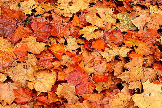 Fall Leaves by Kimberly Oegerle