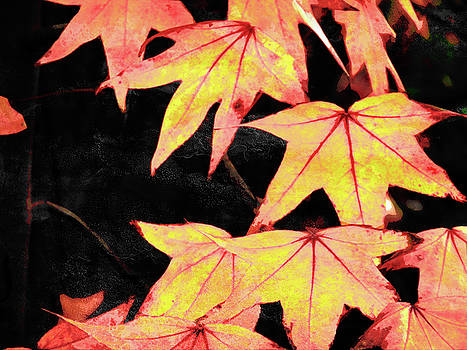 Fall Leaves by Robert Ball