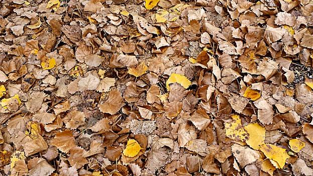 Fall Leaves by Susan Kinney