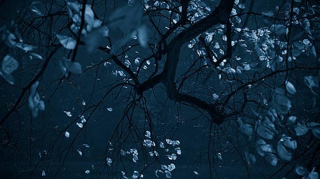 Fall Night by Dorit Fuhg