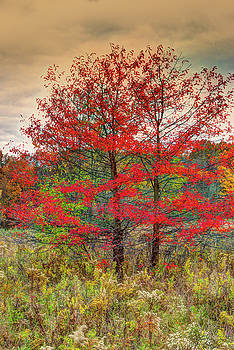 Fall Painting by Skip Tribby