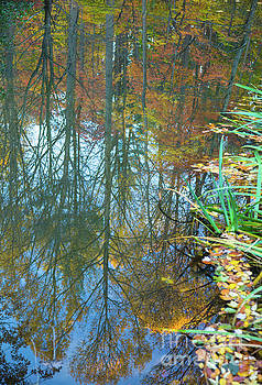 Fall Pond Reflection by Todd Breitling