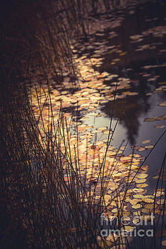 Fall Pond by The Forests Edge Photography - Diane Sandoval