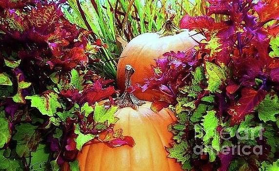 Fall Pumpkins by Diana Chason