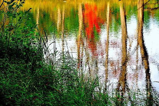 Fall Reflections by Elfriede Fulda