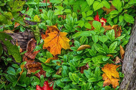 Fall by Rhys Templar