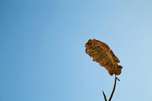 Fall Simplicity by Joanna Madloch