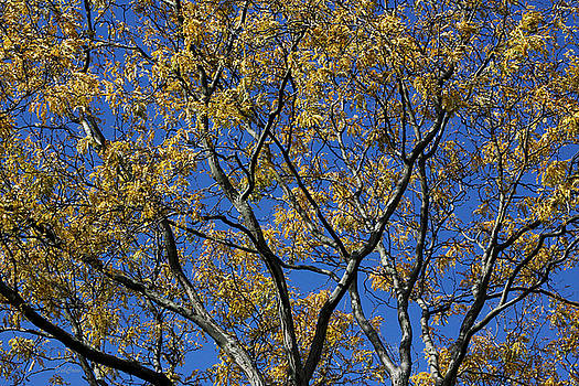 Fall Splendor and Glory by Deborah  Crew-Johnson