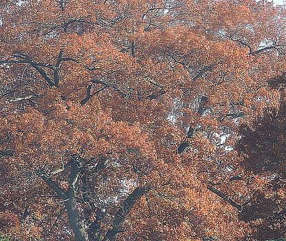 Fall Sunlight by Shon Saylor