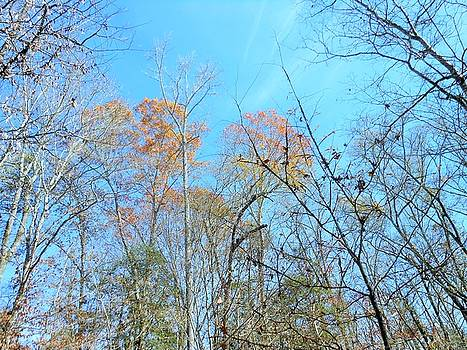 Fall Trees by Kay Gilley