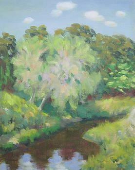 Fall Trees on Cypress Creek by Texas Tim Webb