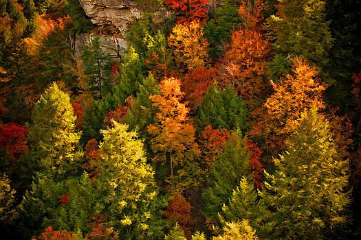 Fall Trees by Paul Bartoszek