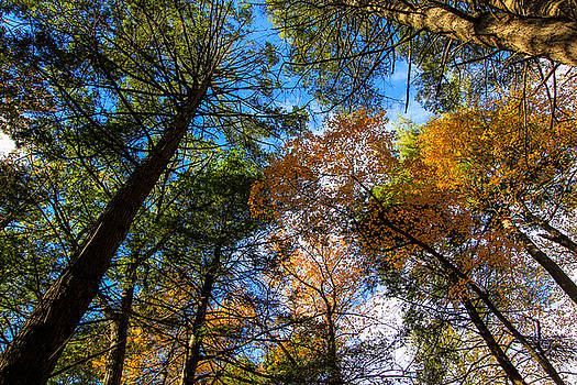 Fall View Up by Jennifer Ansier