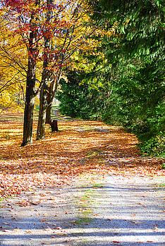 Fall Walk by Peter  McIntosh
