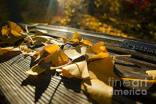 Fallen and Benched by Jamie Rabold