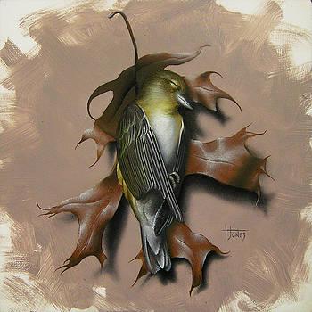 Fallen Finch by Timothy Jones